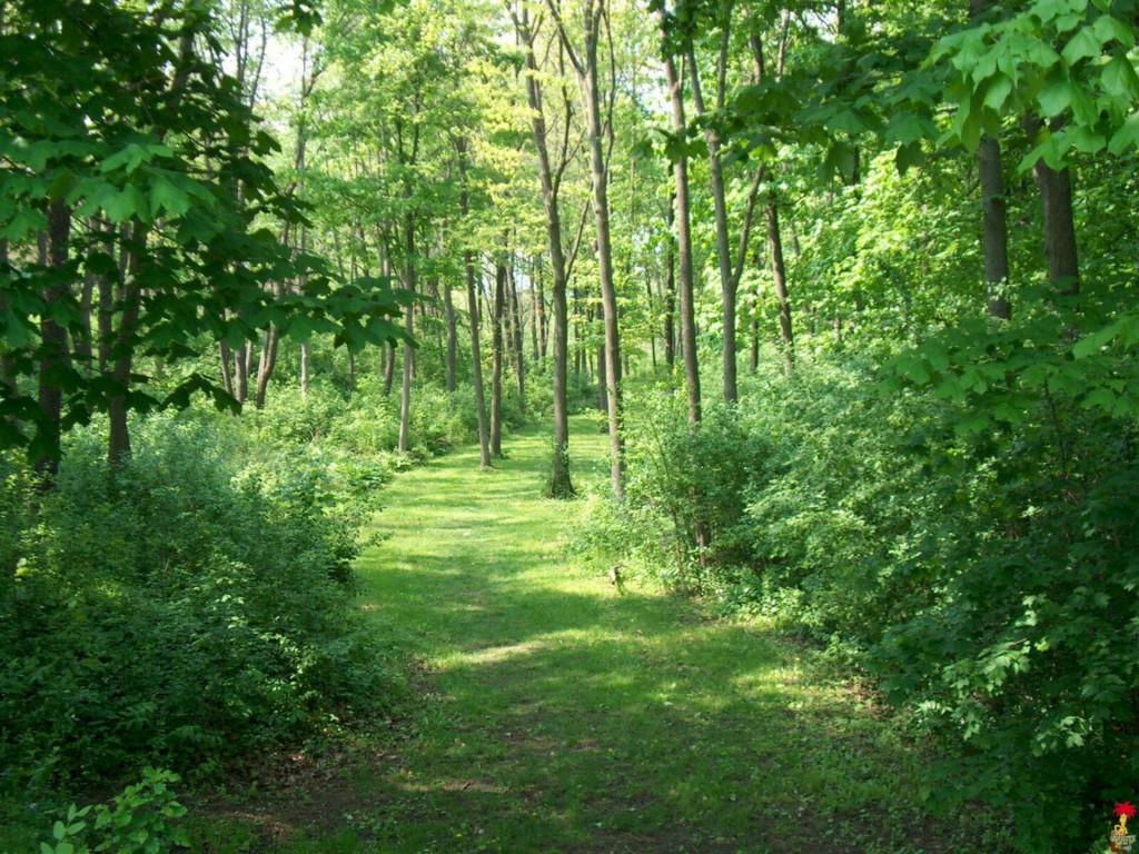 bg-forest_1920